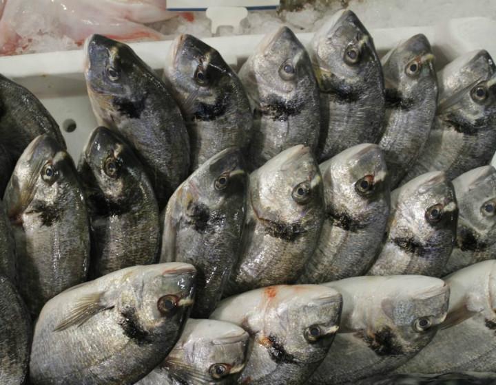 pesce_fresco_biologico_varpesca_olbia