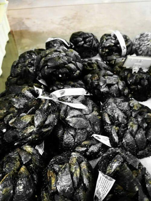 cozze olbia varpesca vendita
