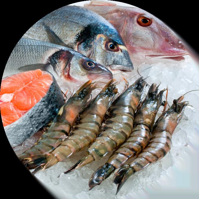 Pesce fresco Olbia