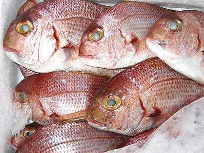 pesce fresco pescheria varpesca olbia