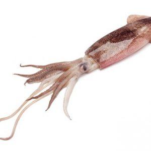 calamari freschi olbia varpesca