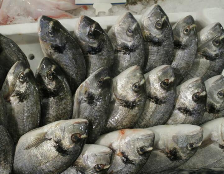 pesce fresco varpesca olbia