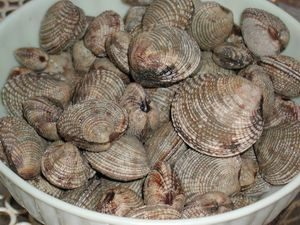 tartufi di mare olbia vendita