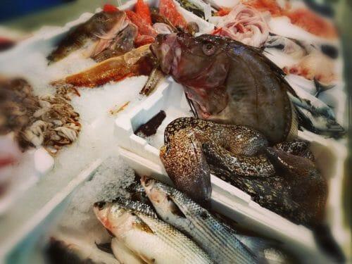 Pesce san Pietro 4
